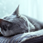 ぐっすり眠るには体内リズムが大切!質のよい睡眠をとるための3つの方法とは