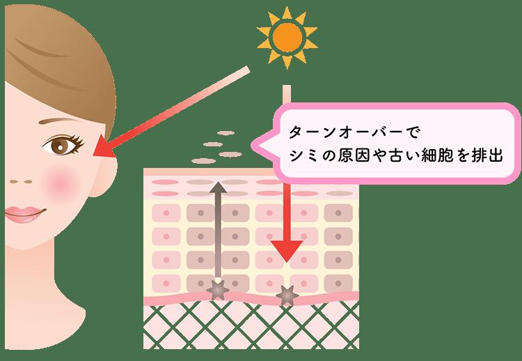 プラセンタの美容効果と摂取方法