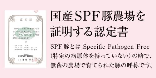 国産SPF豚農場を証明する認定書、SPF 豚とは Specific Pathogen Free(特定の病原体を持っていない)の略で、無菌の農場で育てられた豚の呼称です。